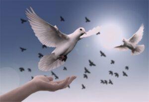 P4 - día de la paz