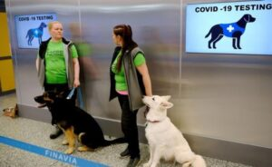 El Salvador, primer país en tener un equipo canino para detectar Covid-19