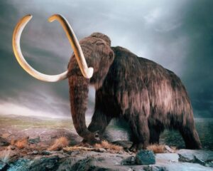 La polémica empresa que quiere jugar a ser Jurassic Park, pero con mamuts lanudos
